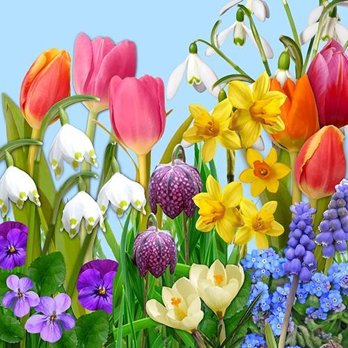 "20 Servietten, 3-lagig 1/4-Falz 33 cm x 33 cm ""Flowers of Spring"""